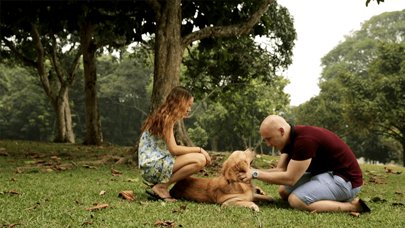 include your furry friends as part of marriage proposal ideas