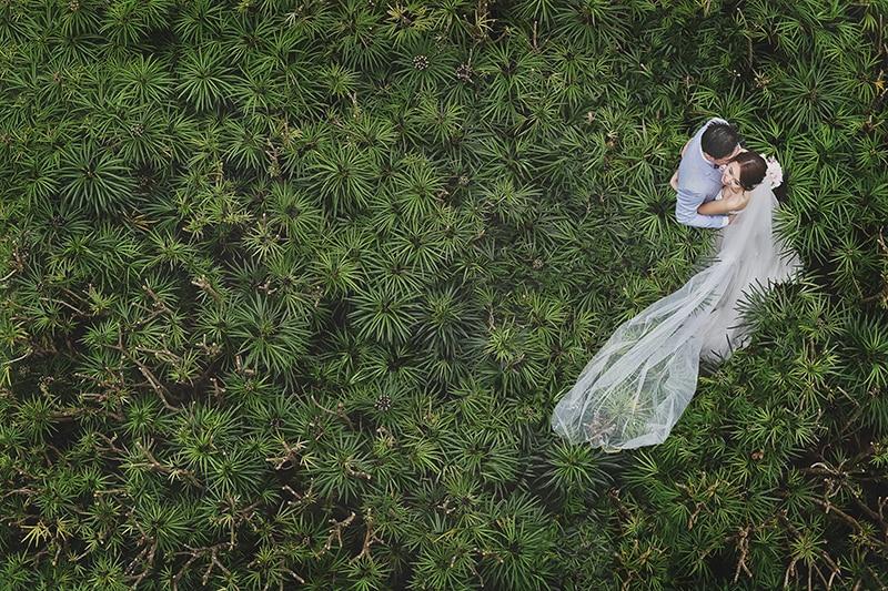 wedding couple plants